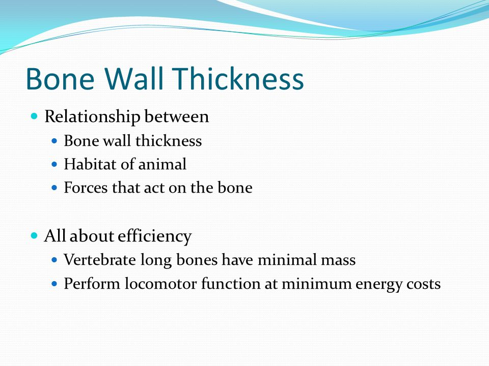Bone Wall Thickness Relationship between Bone wall thickness Habitat of animal Forces that act on the bone All about efficiency Vertebrate long bones have minimal mass Perform locomotor function at minimum energy costs
