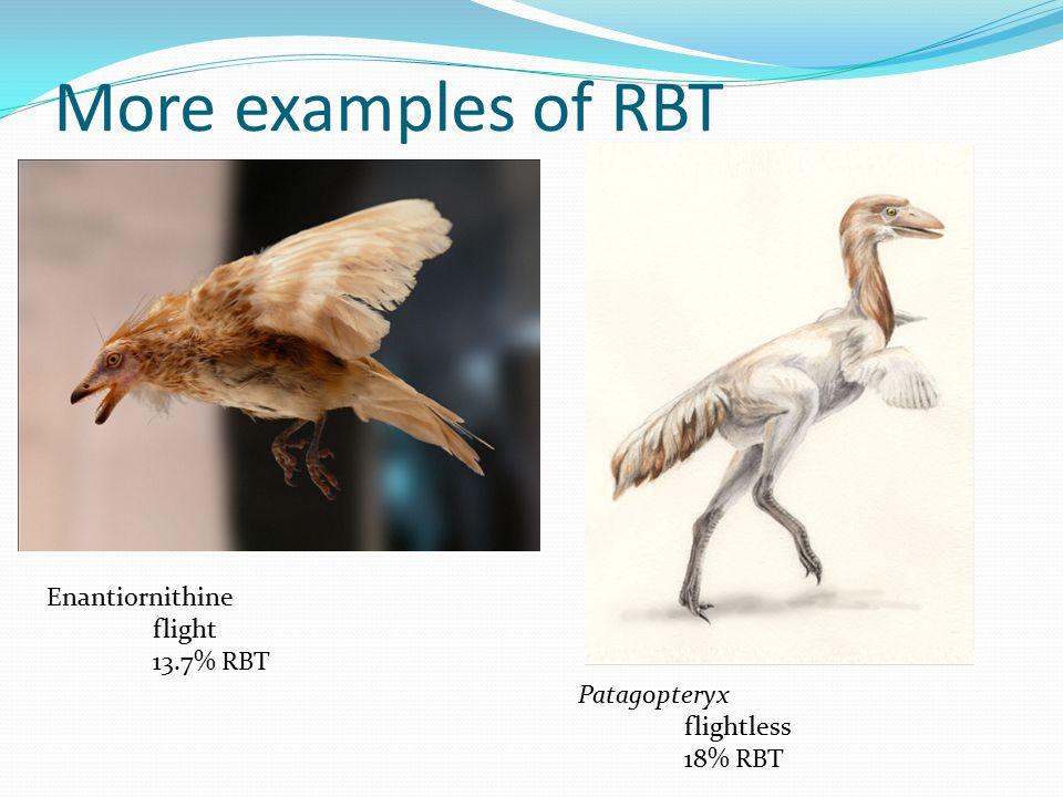 More examples of RBT Enantiornithine flight 13.7% RBT Patagopteryx flightless 18% RBT
