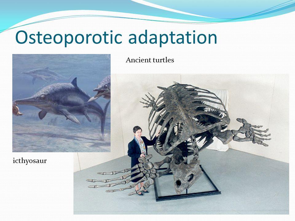 Osteoporotic adaptation icthyosaur Ancient turtles