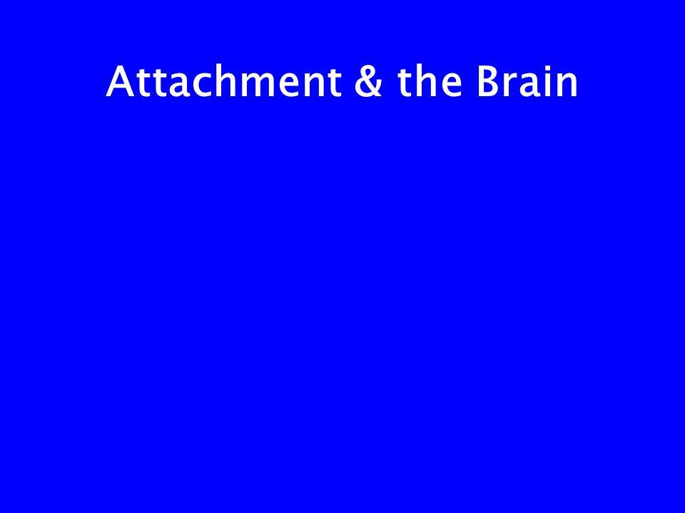 Attachment & the Brain