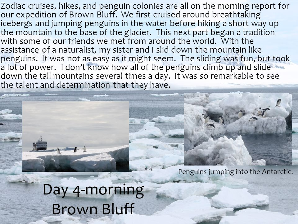 Zodiac cruises, hikes, and penguin colonies are all on the morning report for our expedition of Brown Bluff. We first cruised around breathtaking iceb