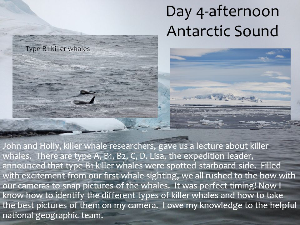 Day 4-afternoon Antarctic Sound John and Holly, killer whale researchers, gave us a lecture about killer whales. There are type A, B1, B2, C, D. Lisa,