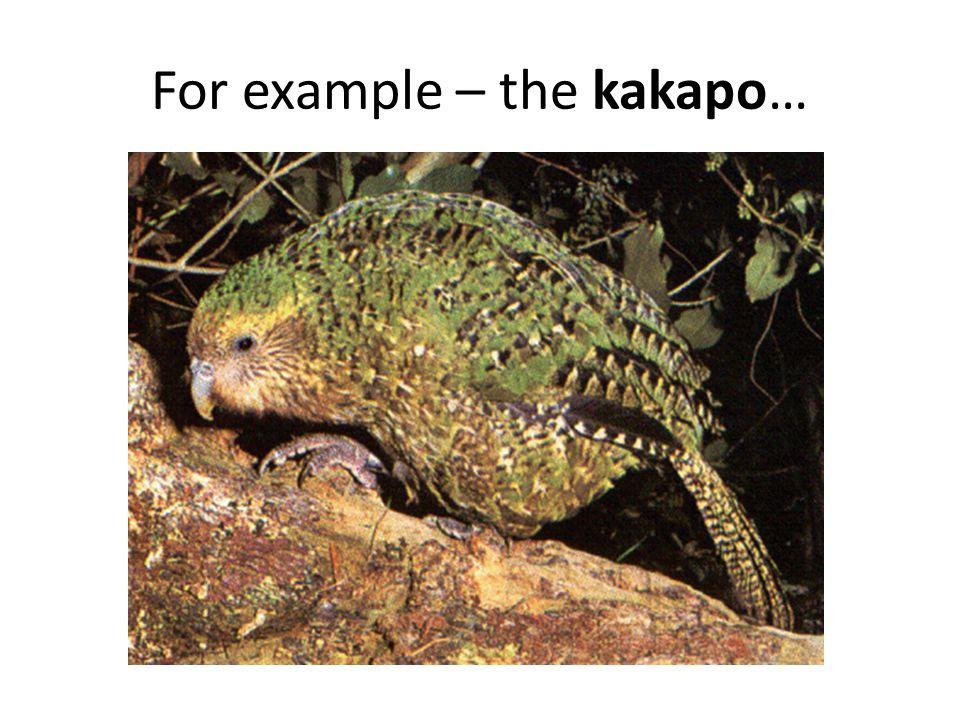 For example – the kakapo…