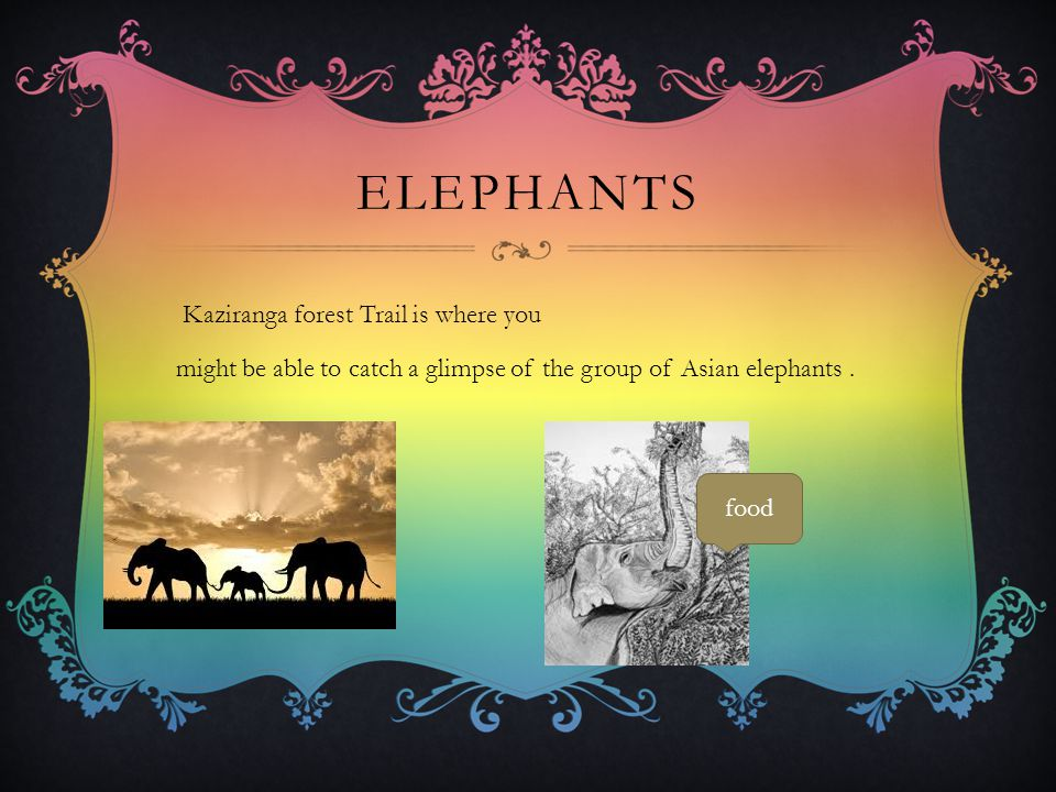 ELEPHANTS Kaziranga forest Trail is where you might be able to catch a glimpse of the group of Asian elephants. food