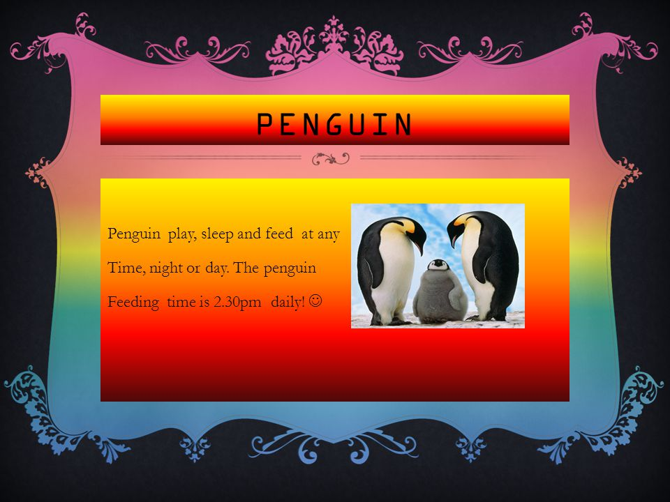 PENGUIN Penguin play, sleep and feed at any Time, night or day.
