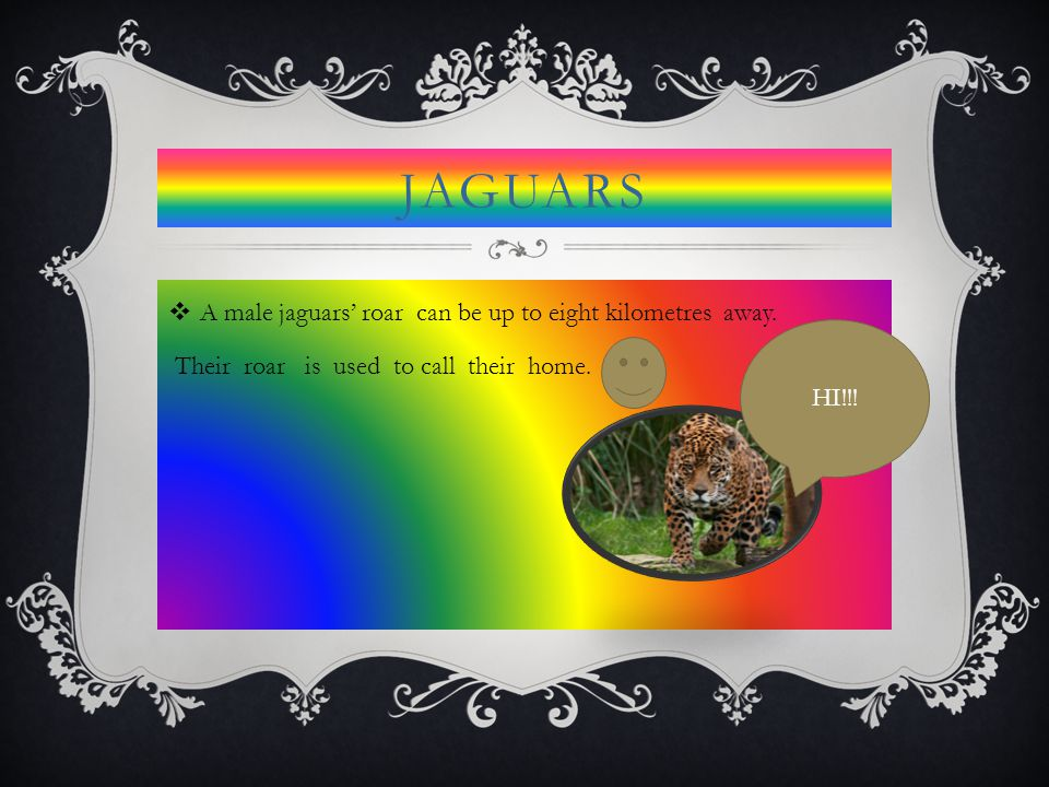 JAGUARS  A male jaguars' roar can be up to eight kilometres away. Their roar is used to call their home. HI!!!