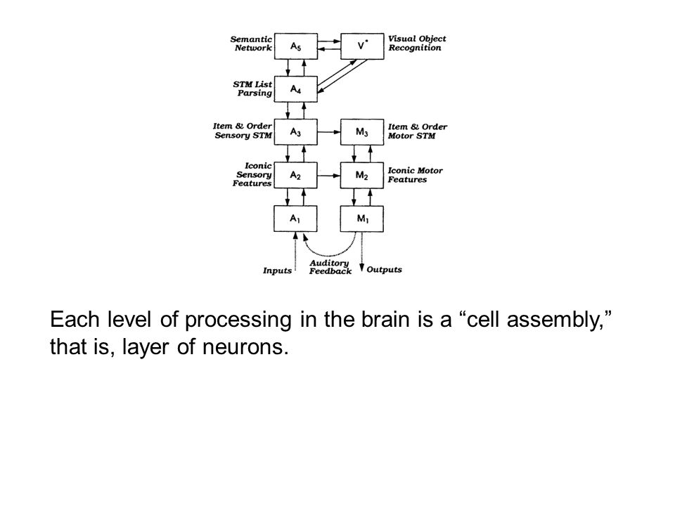 """Each level of processing in the brain is a """"cell assembly,"""" that is, layer of neurons."""