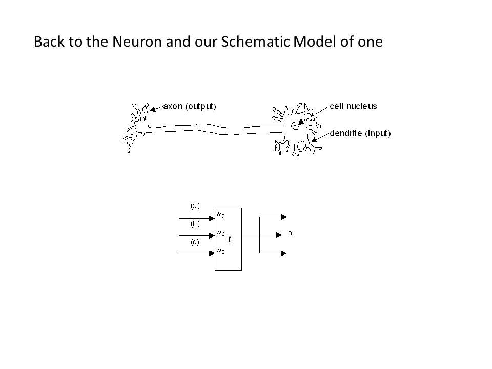 Back to the Neuron and our Schematic Model of one