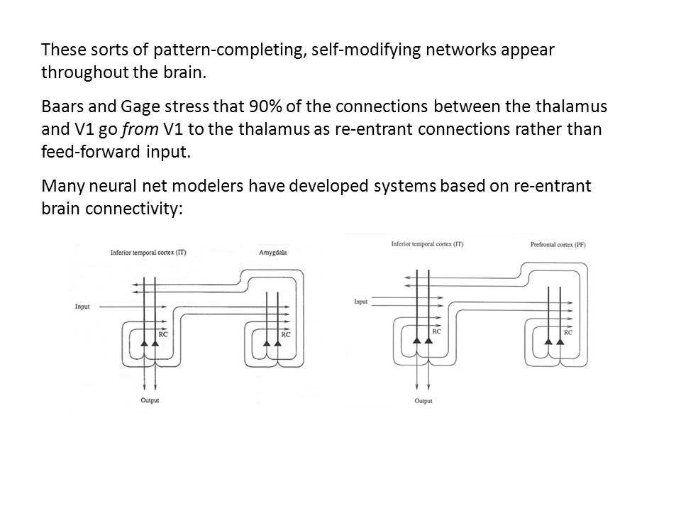 These sorts of pattern-completing, self-modifying networks appear throughout the brain. Baars and Gage stress that 90% of the connections between the