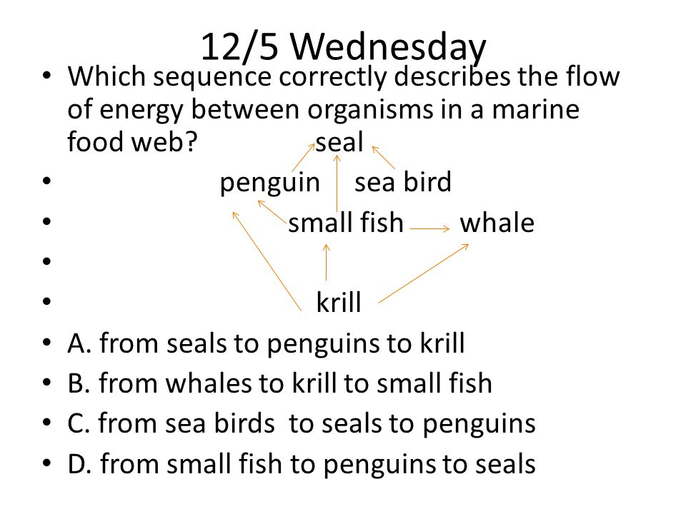 12/5 Wednesday Which sequence correctly describes the flow of energy between organisms in a marine food web.