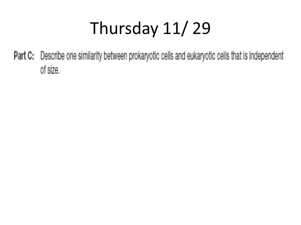 Thursday 11/ 29