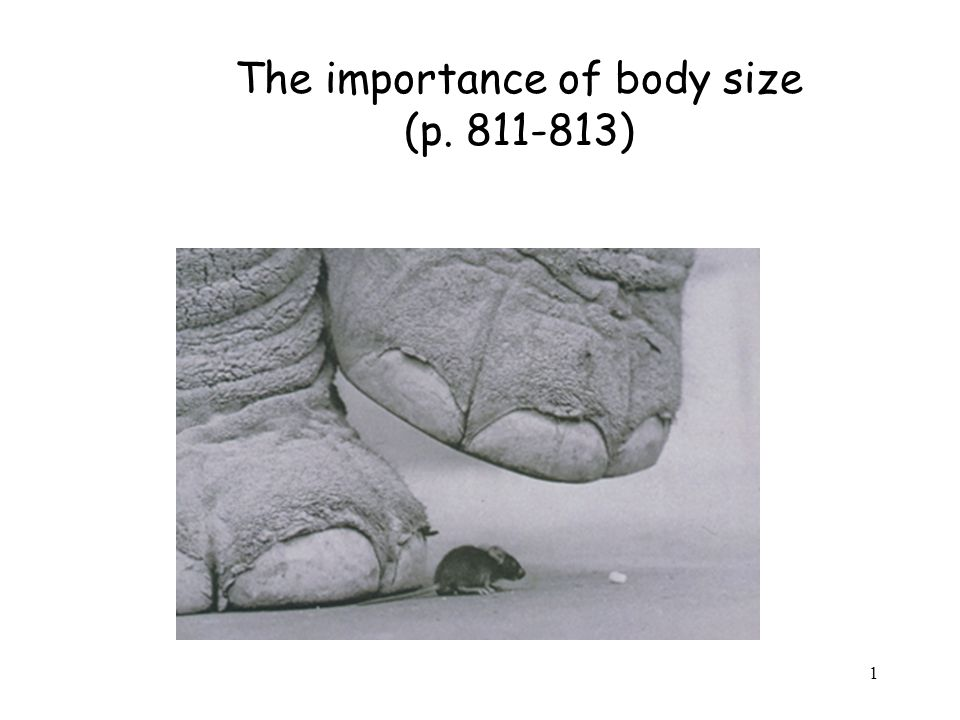 Overall message for this lecture Body mass matters for biology because: 1)It determines the surface/volume ratio of an organism.