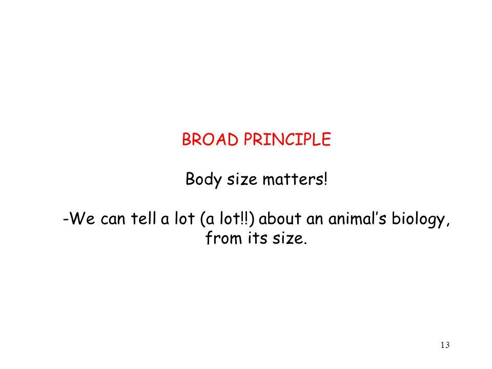BROAD PRINCIPLE Body size matters.
