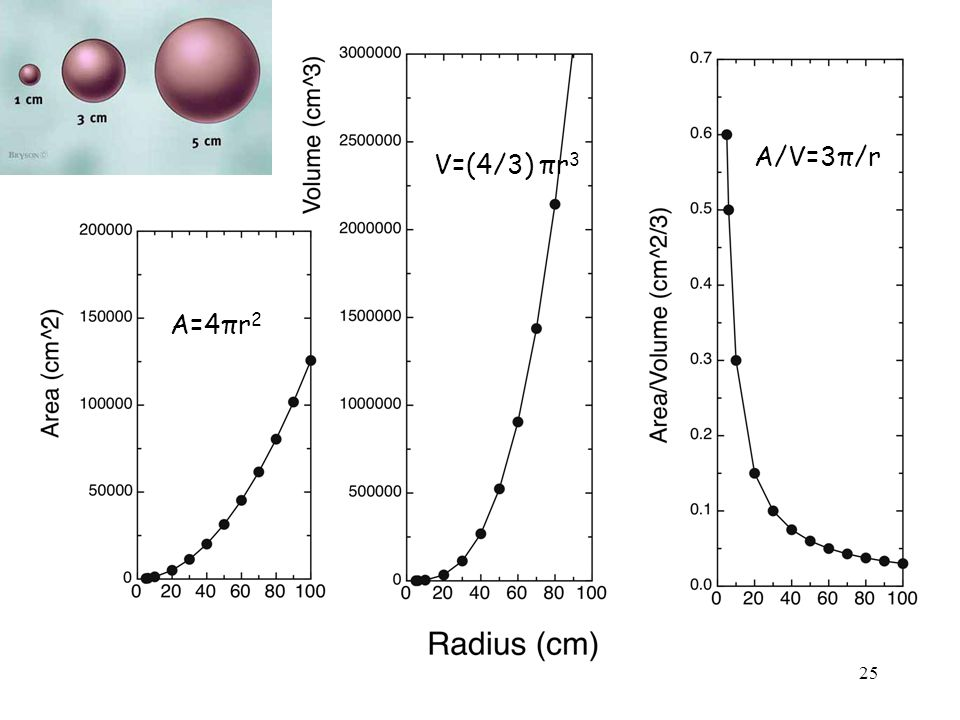 A=4πr 2 V=(4/3) πr 3 A/V=3π/r 25