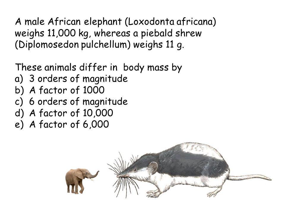 8 A male African elephant (Loxodonta africana) weighs 11,000 kg, whereas a piebald shrew (Diplomosedon pulchellum) weighs 11 g.