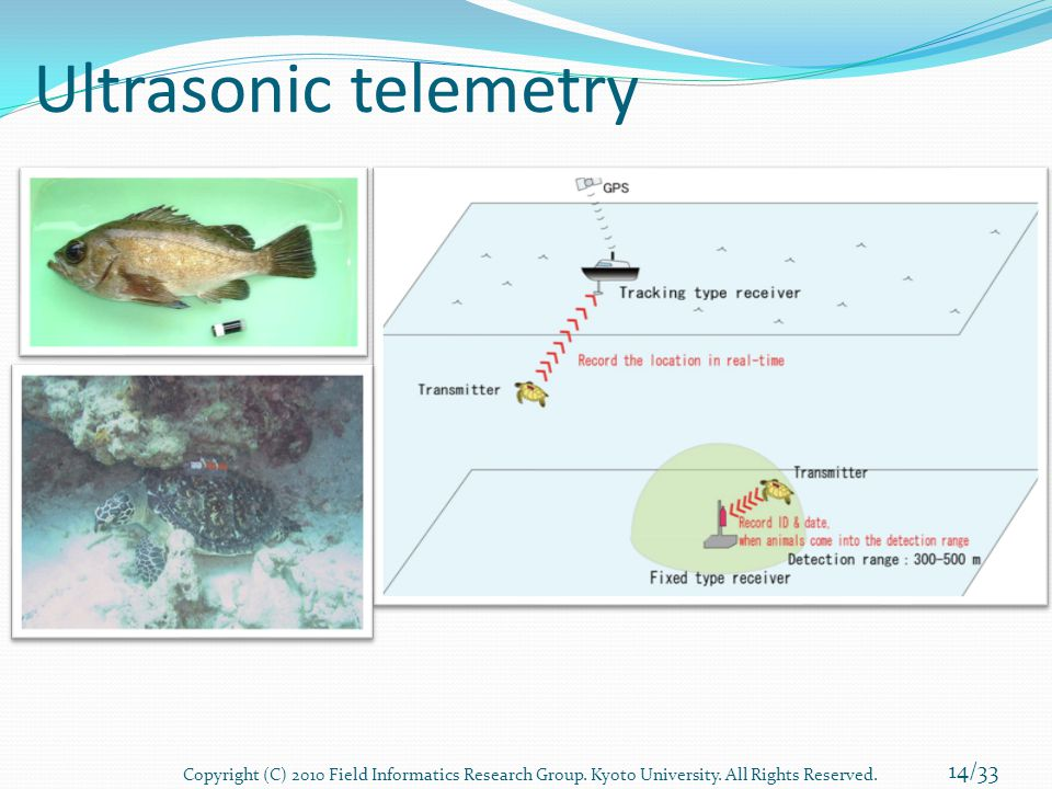 Ultrasonic telemetry 14/33 Copyright (C) 2010 Field Informatics Research Group. Kyoto University. All Rights Reserved.