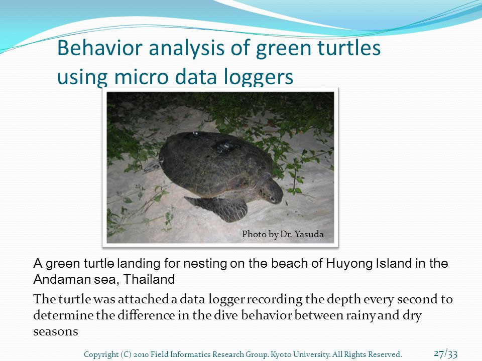 Behavior analysis of green turtles using micro data loggers A green turtle landing for nesting on the beach of Huyong Island in the Andaman sea, Thail