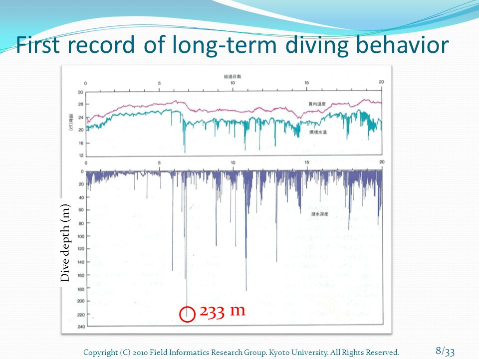 First record of long-term diving behavior 233 m Dive depth (m) 8/33 Copyright (C) 2010 Field Informatics Research Group. Kyoto University. All Rights