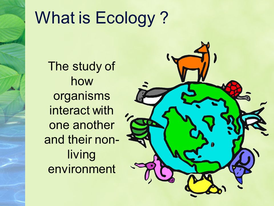 What is Ecology ? The study of how organisms interact with one another and their non- living environment