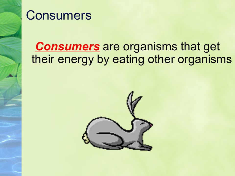 Consumers Consumers are organisms that get their energy by eating other organisms