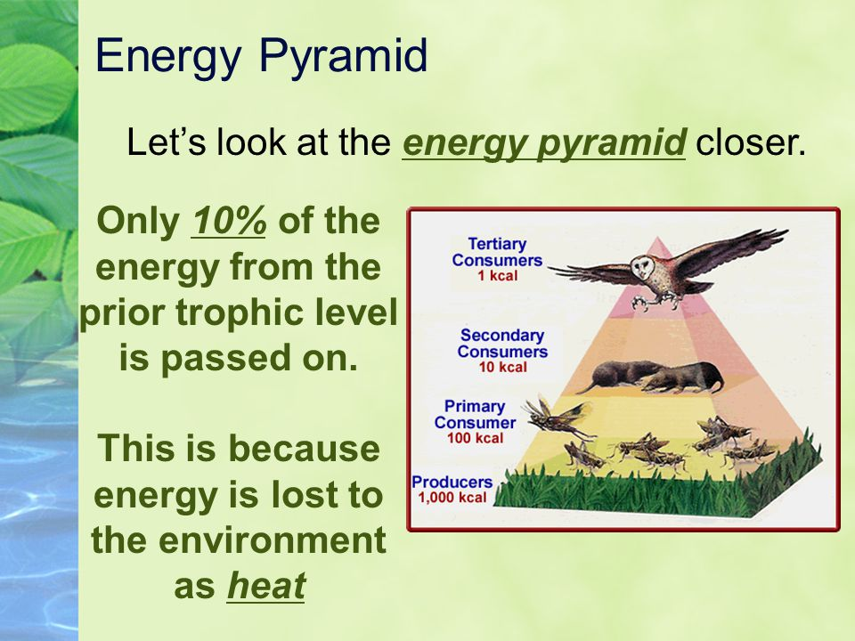 Energy Pyramid Let's look at the energy pyramid closer. Only 10% of the energy from the prior trophic level is passed on. This is because energy is lo