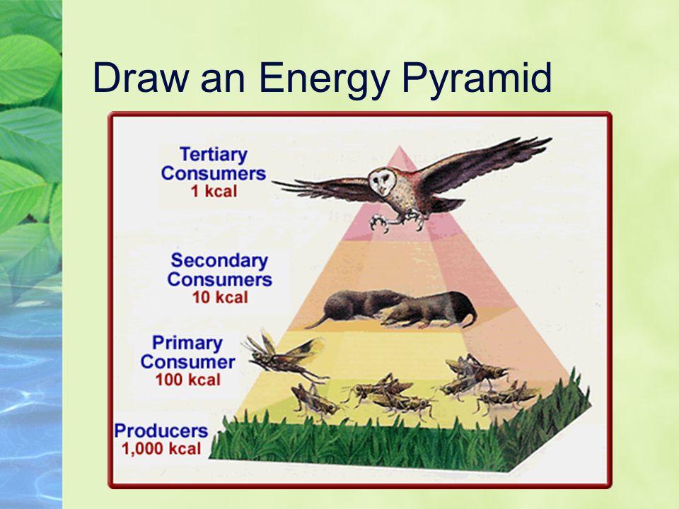 Draw an Energy Pyramid