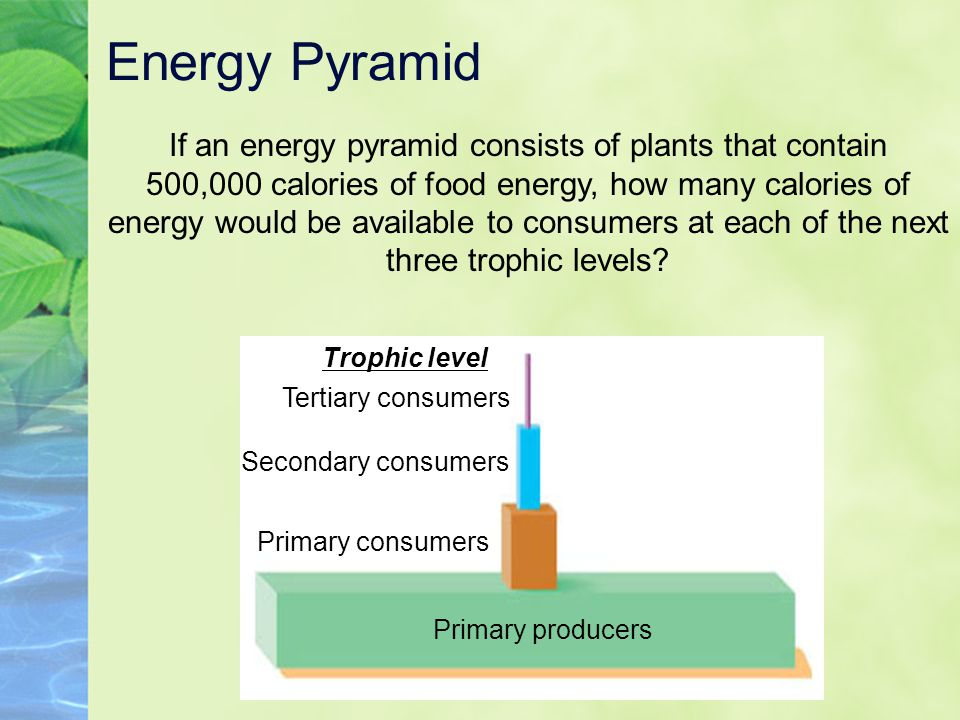 Energy Pyramid If an energy pyramid consists of plants that contain 500,000 calories of food energy, how many calories of energy would be available to
