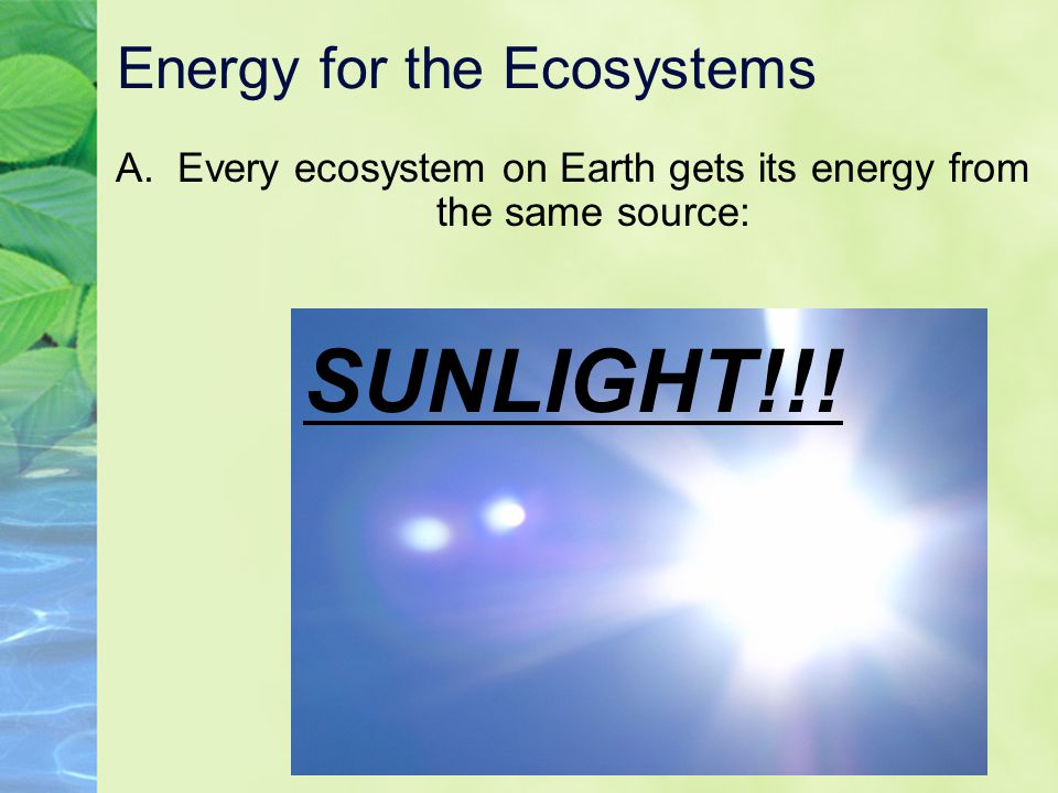 Energy for the Ecosystems A. Every ecosystem on Earth gets its energy from the same source: SUNLIGHT!!!