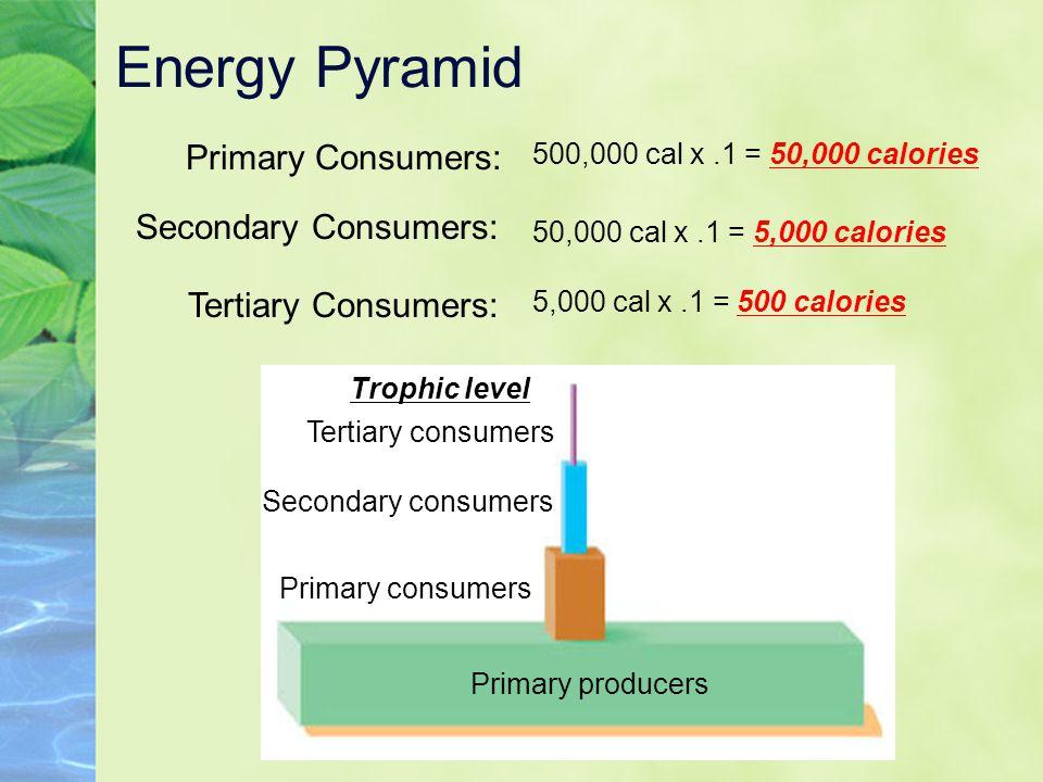 Energy Pyramid Primary Consumers: Trophic level Primary producers Tertiary consumers Secondary consumers Primary consumers Secondary Consumers: Tertia