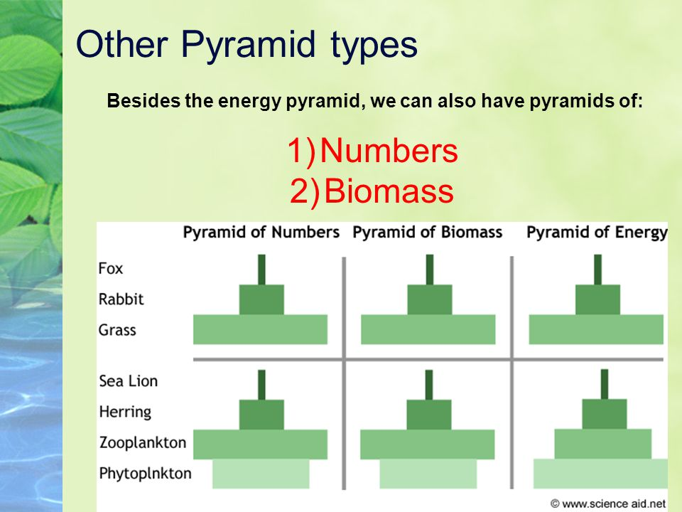 Other Pyramid types Besides the energy pyramid, we can also have pyramids of: 1)Numbers 2)Biomass