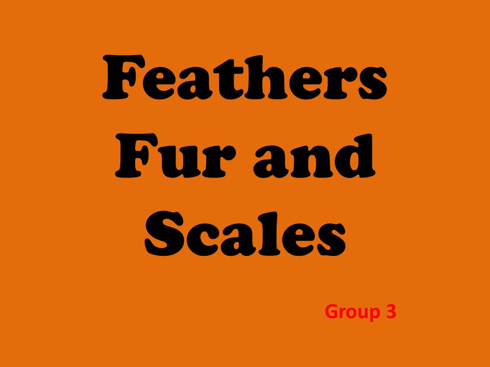 Feathers Fur and Scales Group 3