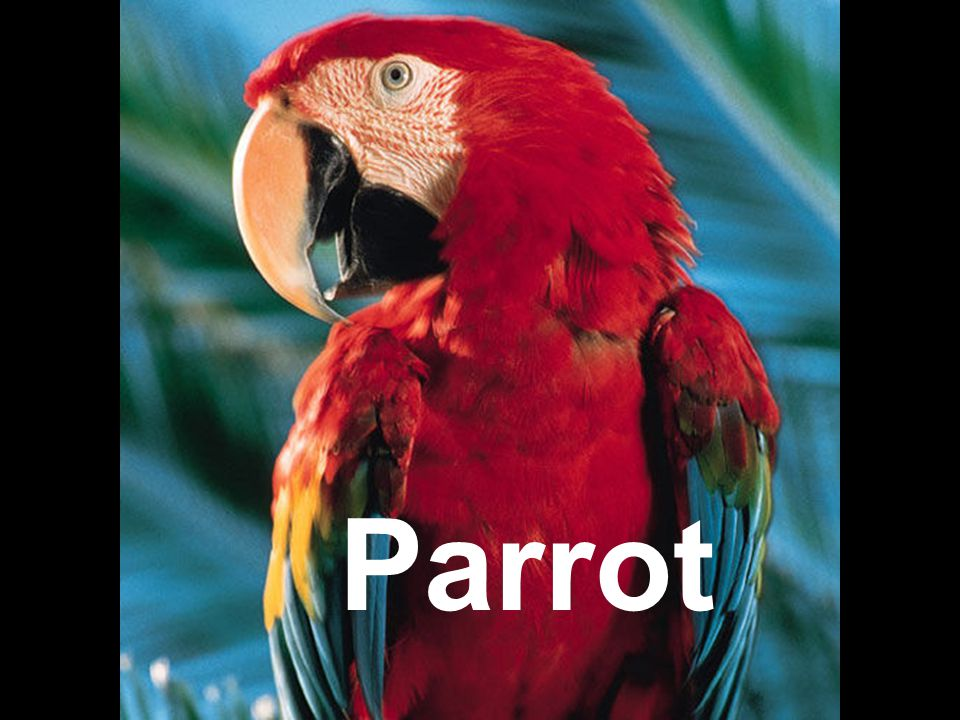 Parrots have feathers fur or scales ?