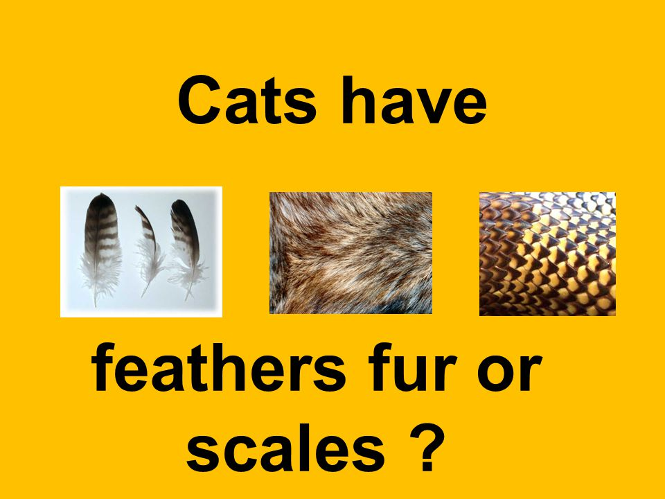 Cats have feathers fur or scales