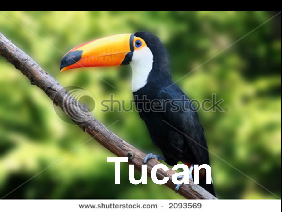 Tucans have feathers fur or scales ?