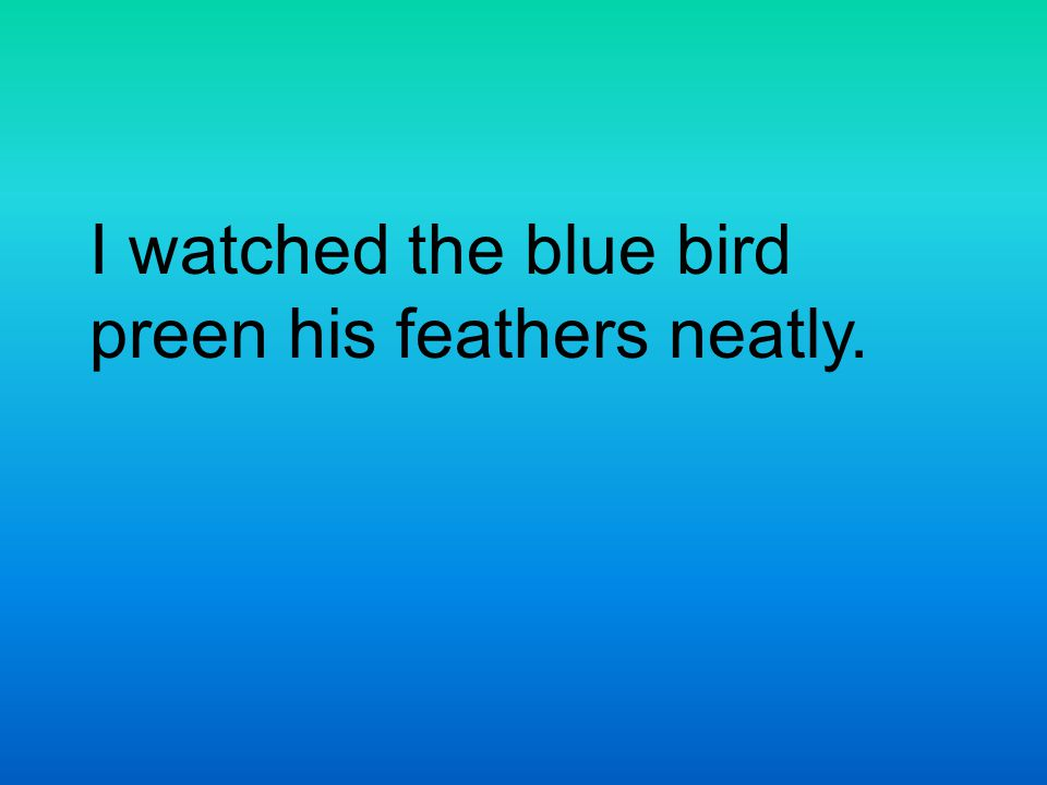 I watched the blue bird preen his feathers neatly.