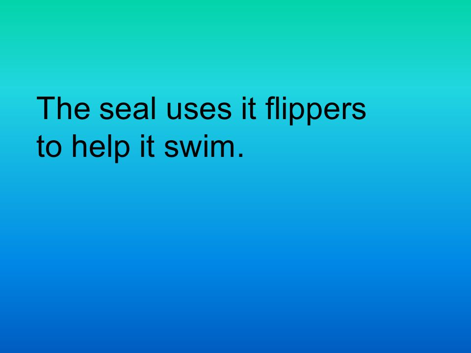The seal uses it flippers to help it swim.