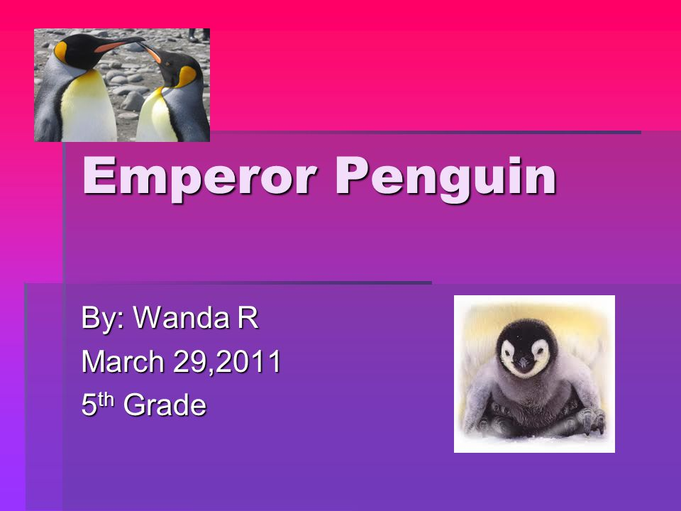 Emperor Penguin By: Wanda R March 29,2011 5 th Grade