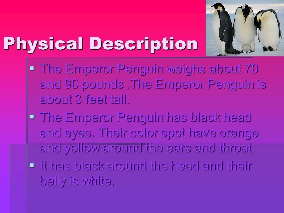 Physical Description  The Emperor Penguin weighs about 70 and 90 pounds.The Emperor Penguin is about 3 feet tall.