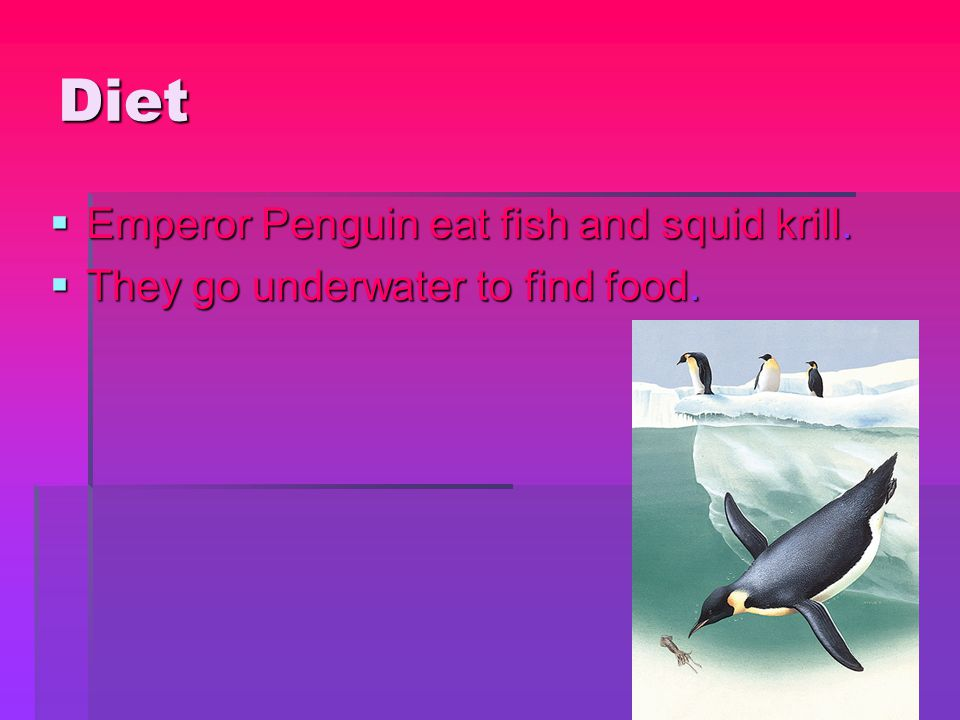 Diet  Emperor Penguin eat fish and squid krill.  They go underwater to find food.