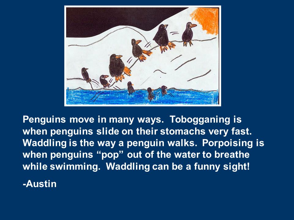 Penguins move in many ways. Tobogganing is when penguins slide on their stomachs very fast. Waddling is the way a penguin walks. Porpoising is when pe
