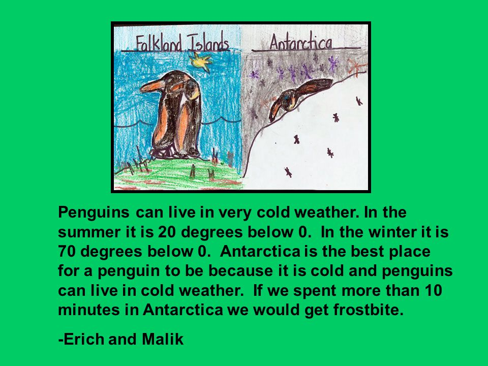 Penguins can live in very cold weather. In the summer it is 20 degrees below 0. In the winter it is 70 degrees below 0. Antarctica is the best place f