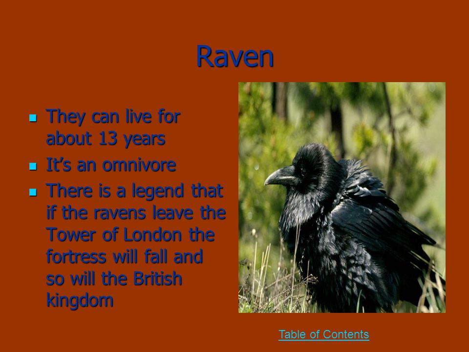 Raven They can live for about 13 years They can live for about 13 years It's an omnivore It's an omnivore There is a legend that if the ravens leave t