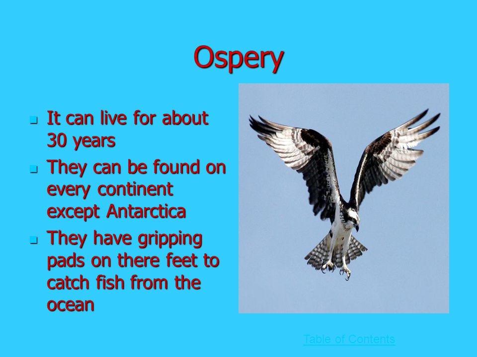 Ospery It can live for about 30 years It can live for about 30 years They can be found on every continent except Antarctica They can be found on every