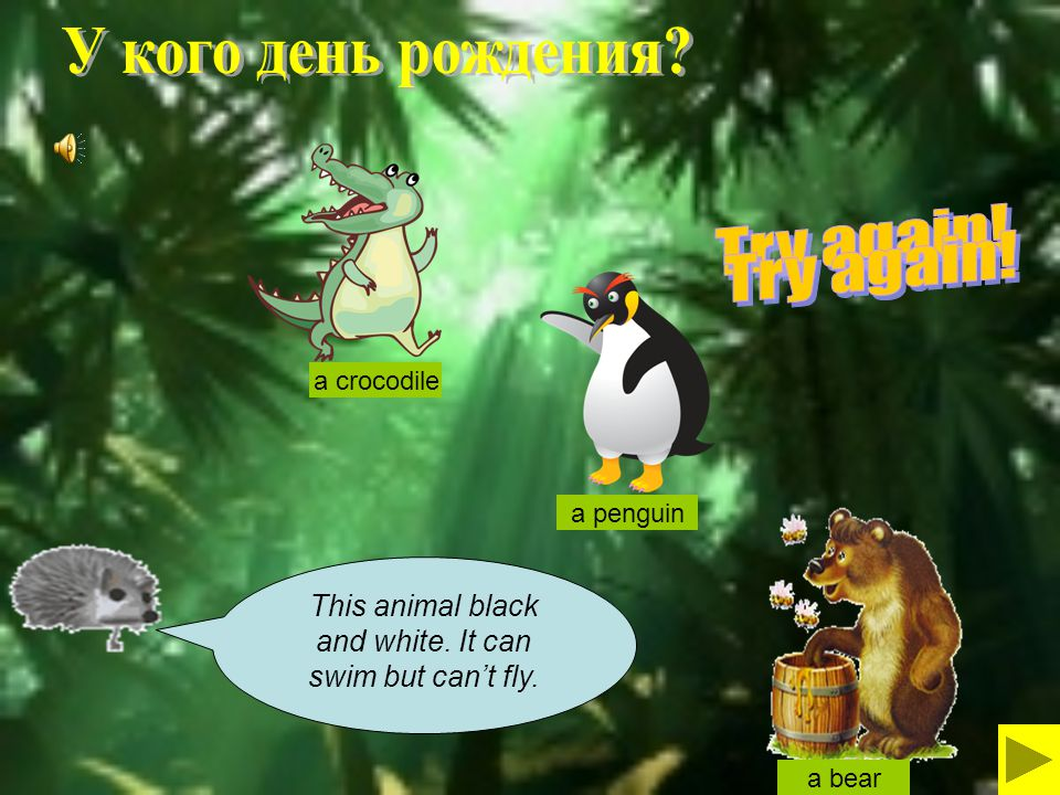 This animal black and white. It can swim but can't fly. a bear a crocodile a penguin
