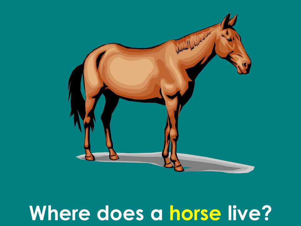 Where does a horse live?