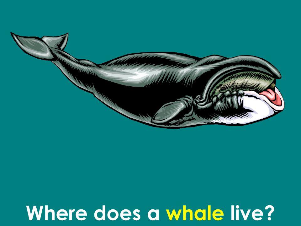 Where does a whale live?