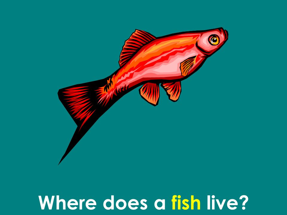 Where does a fish live