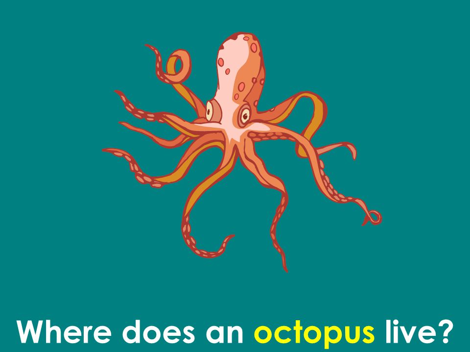Where does an octopus live