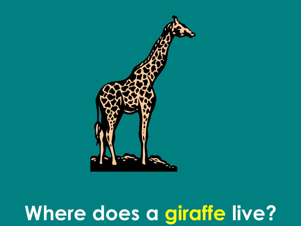 Where does a giraffe live