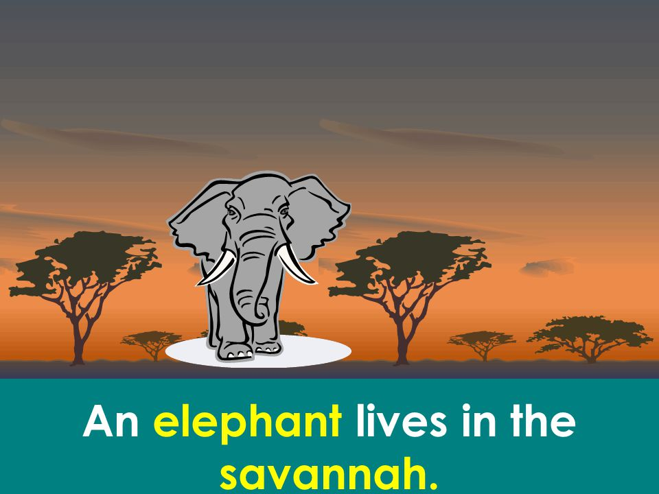 An elephant lives in the savannah.